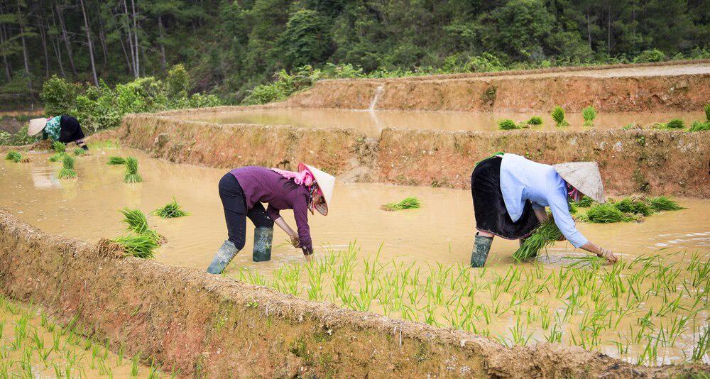 Guide de voyage Vietnam pas cher