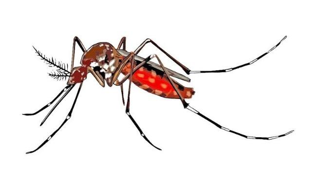 Conte du Vietnam : L'invention des moustiques