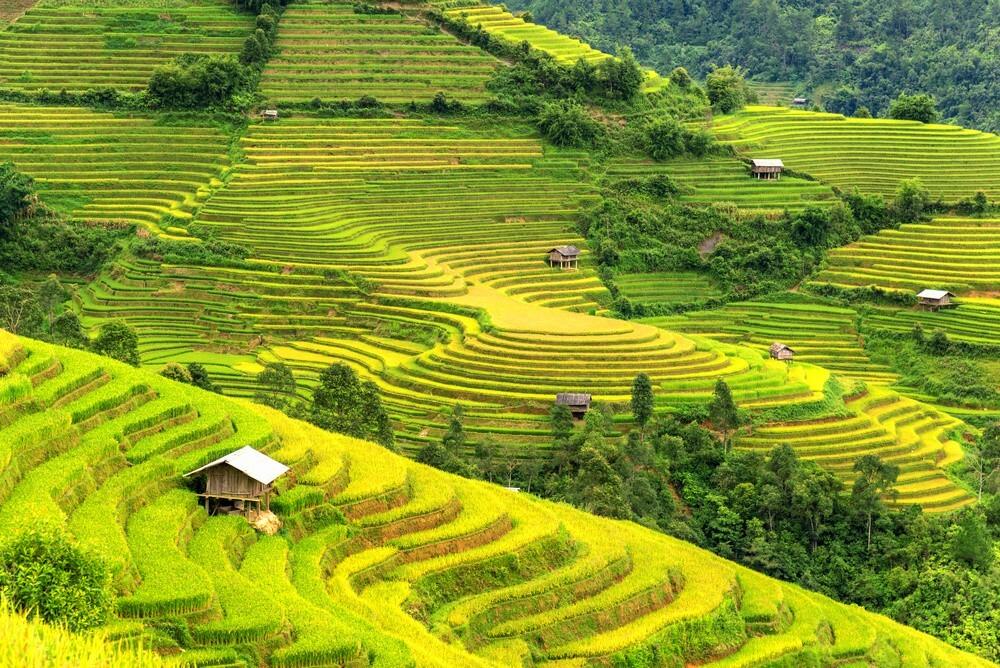 Découverte des rizières en terrasse à Sapa